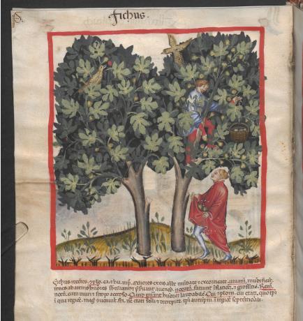 Vegan und vegetarisch im Mittelalter?